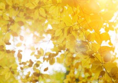 Autumn background, nature pattern.