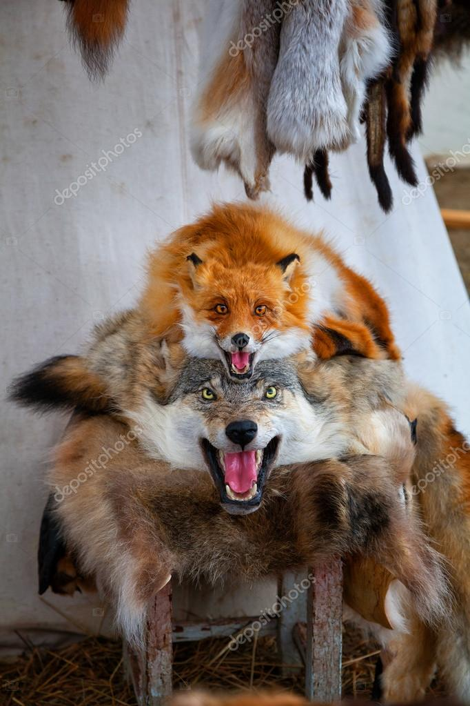 Groovy pelt martwy wilk i Fox na sprzedaż. sprzedaży ubrane skórek UT69