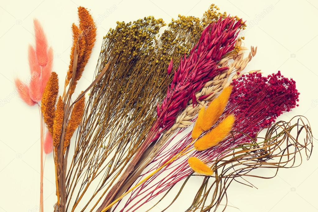 Plantas Secas Decorativas Fondo De Un Primer Plano De Flores - Plantas-secas-decoracion