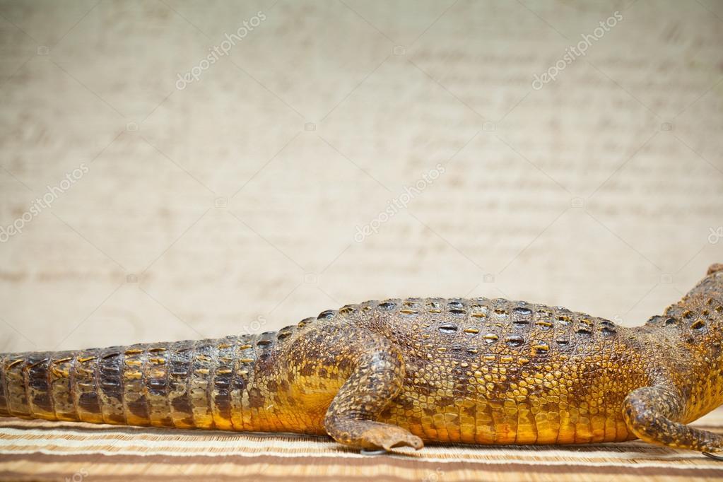 El cuerpo de un cocodrilo — Foto de stock © Devin_Pavel #55900595