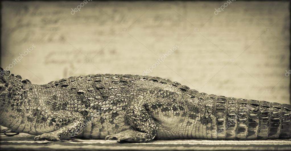 El cuerpo de un cocodrilo, Foto teñida de amarillo. Estilo vintage ...