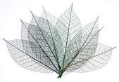 kostry z listí