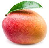 Fotografie Mango ovoce kapkami vody. Izolované na bílém pozadí