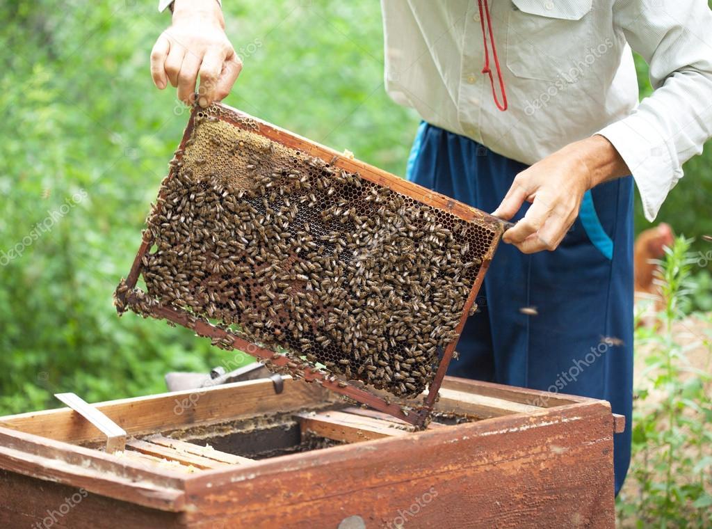 Imker hält in der hand Waben Rahmen mit Bienen drauf — Stockfoto ...