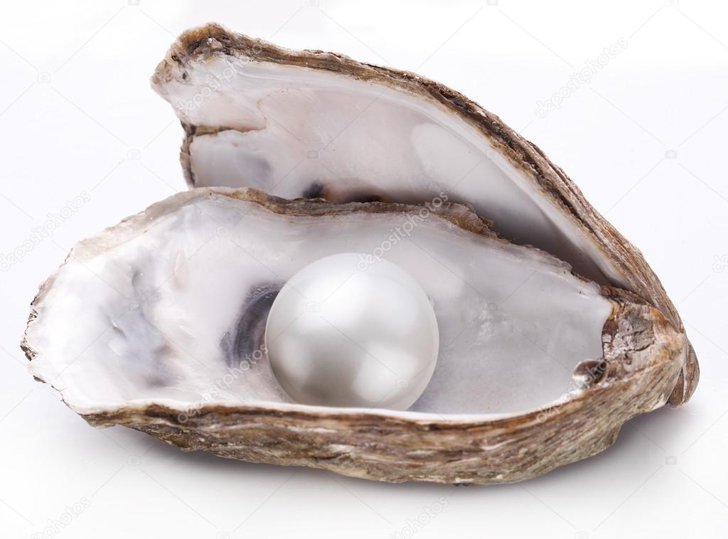 Oyster with pearl isolated. — Stock Photo © Valentyn ...