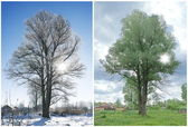 Két szezon, és ugyanazt a fát.