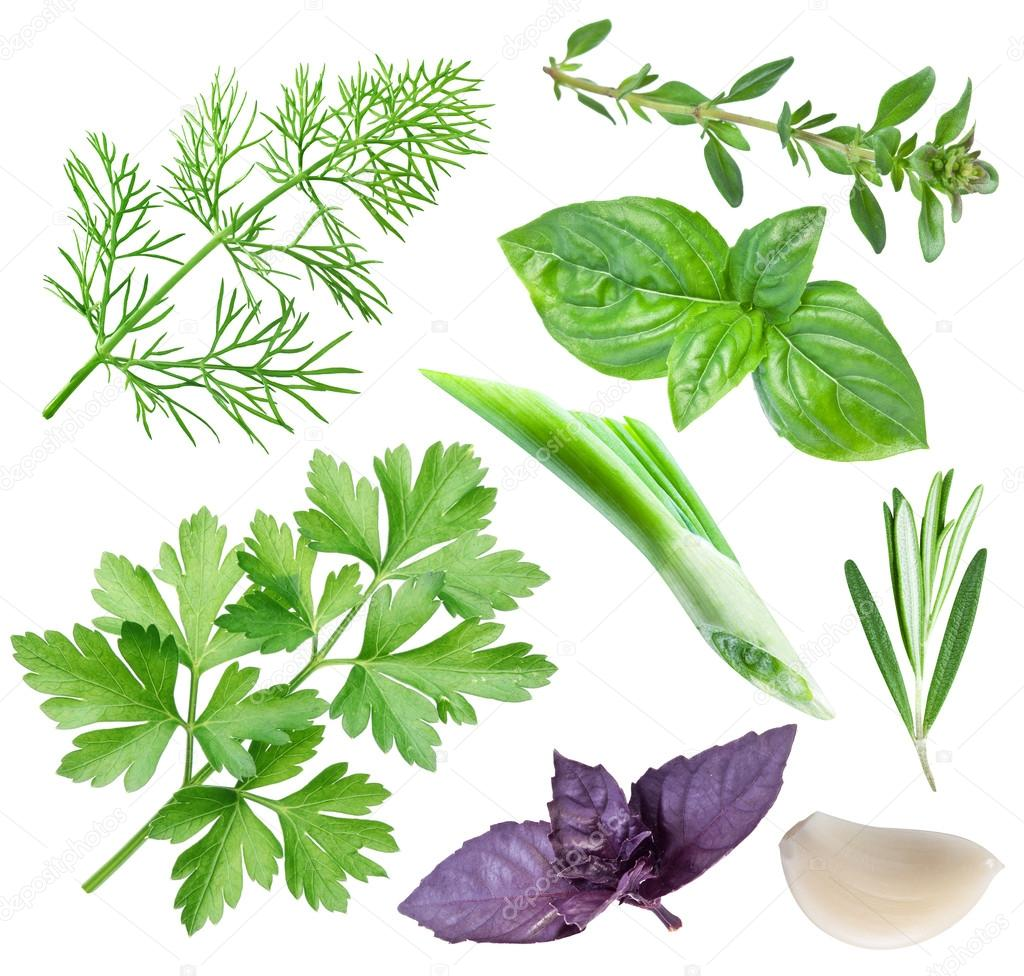 Different spices and herbs on white background. File contains clipping paths for each spice.