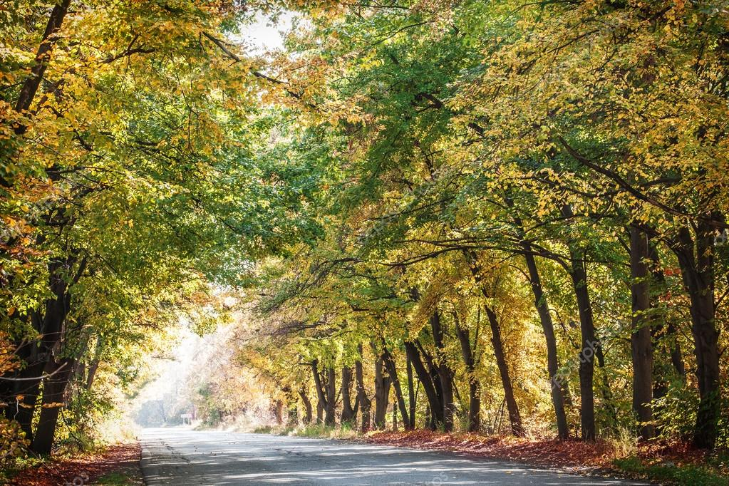 Autumn landscape with road and beautiful colored trees.