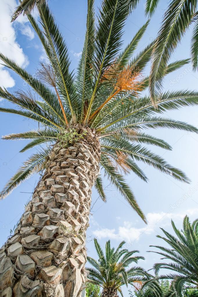palmier 92