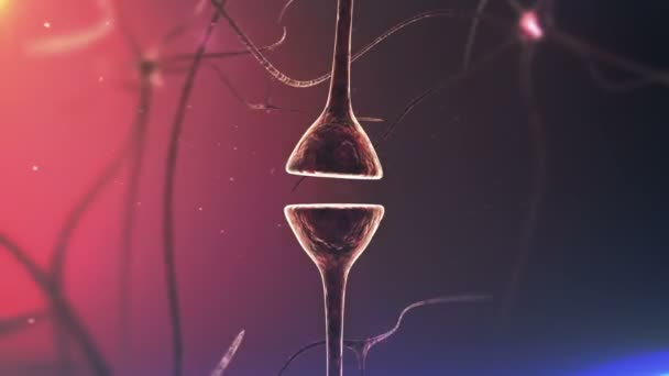 Synapse and Neurons and electrical signals