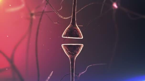 Synapse a neuronů a elektrické signály