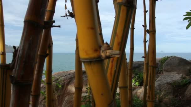 Bamboo trees and Sea