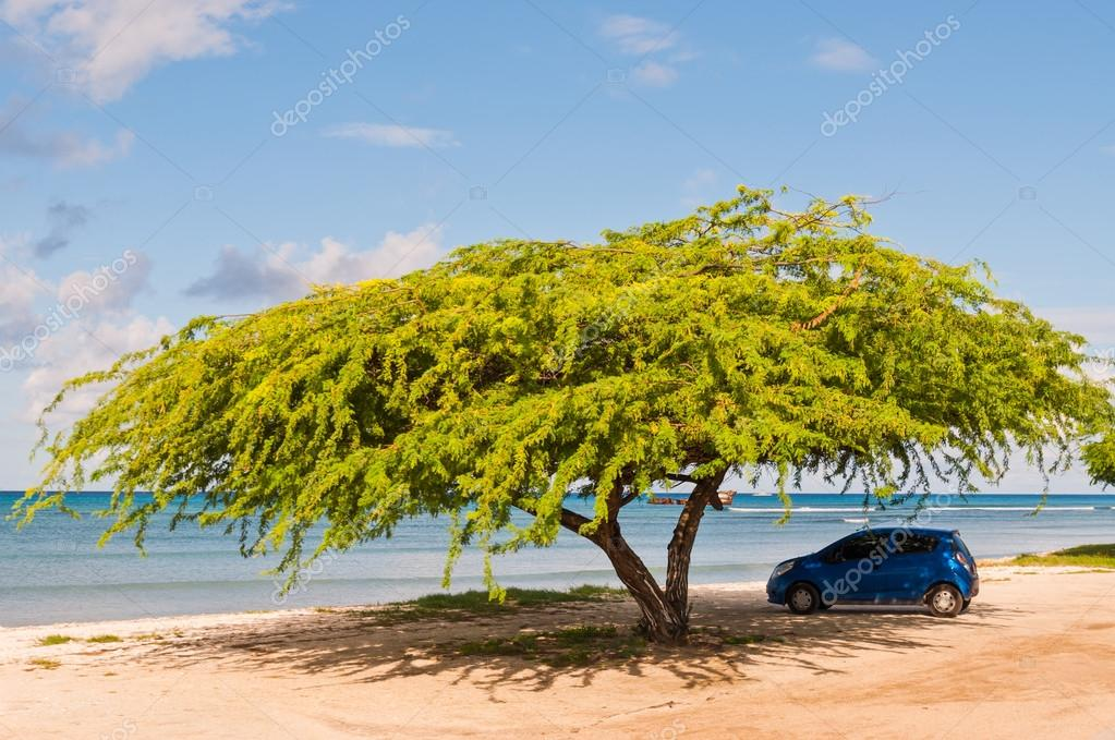 voiture sous l 39 arbre parasol sur la plage de mer tropicale photo ditoriale 118414944. Black Bedroom Furniture Sets. Home Design Ideas