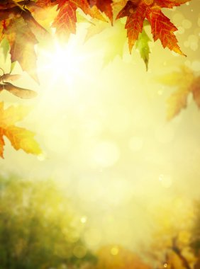 Art abstract autumn tree  nature  background