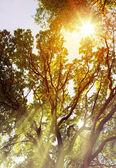 umění sluneční paprsky nalít přes stromy v lese