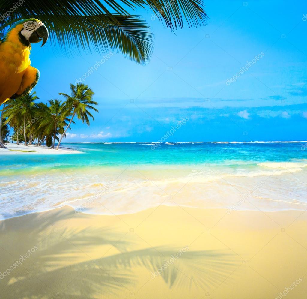 Art  beautiful Caribbean uninhabited tropical sea beach