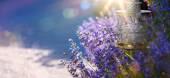 umění v létě nebo na jaře krásnou zahradu s květy levandule