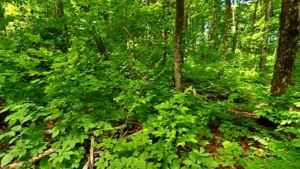Northwoods Lesní krajina