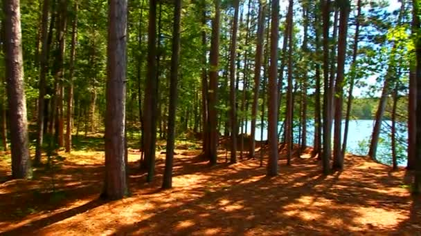 Northern Highlands amerikai légió állami erdő