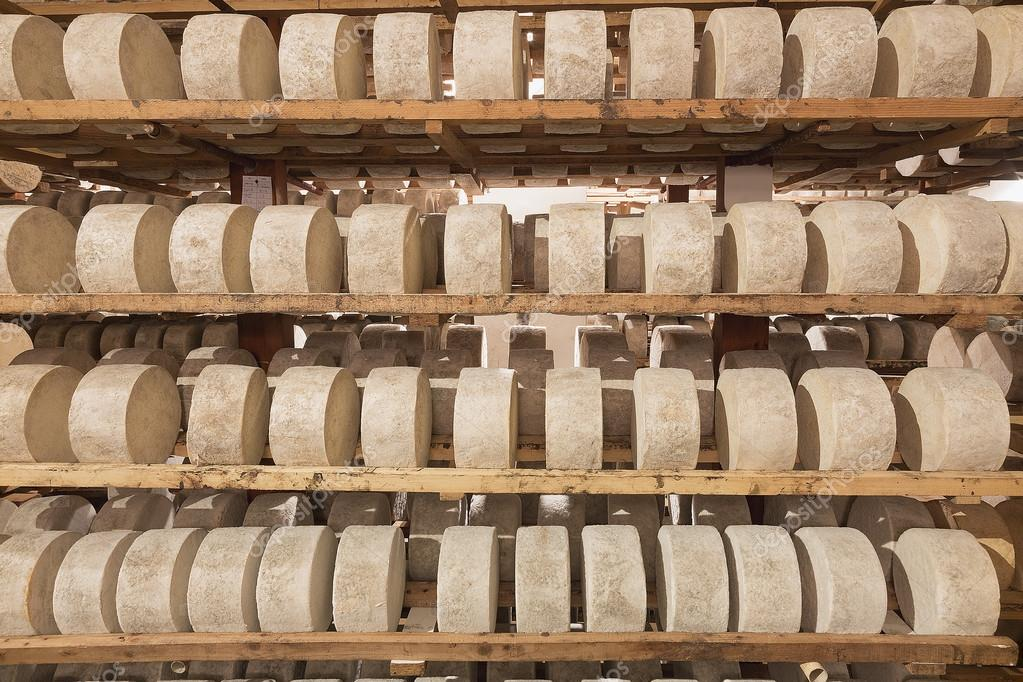 Rows of fermenting cheese