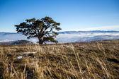 Jeden strom v přírodě