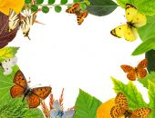Leaves and butterflies