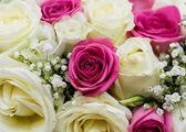 Fotografie Roses