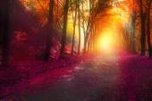 őszi park a nap sugarai fantasy jelenet