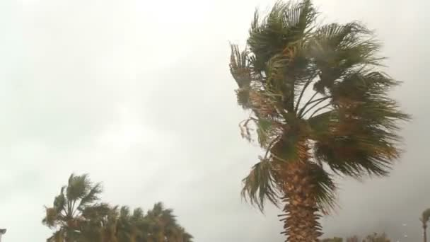 Palmový strom ve větru