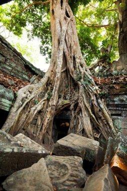 Ta Prohm temple  ruins