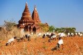 Photo Ancient pagodas in Bagan, Myanmar