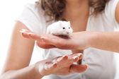 Bílá myš v ženských rukou