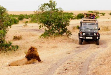Safari with lions, Africa