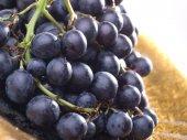 Fotografie Ripe blue grape