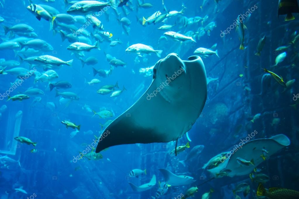 Aquatic animals in a huge aquarium