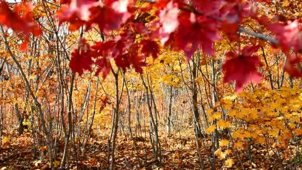 Őszi erdő felvétel