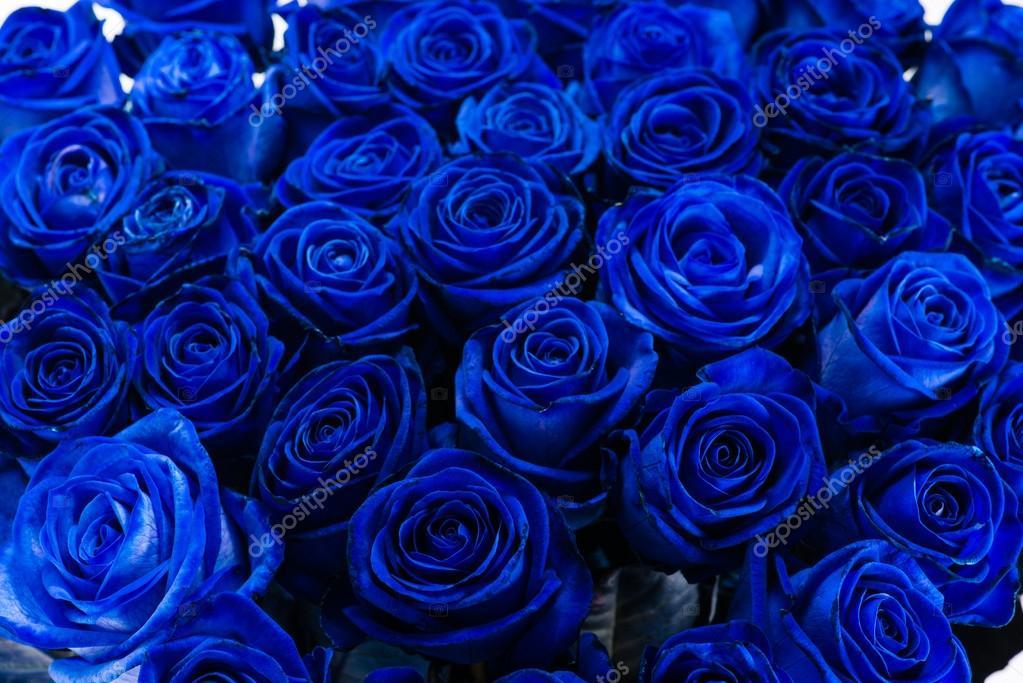 Mazzo primo piano sfondo delle rose blue foto stock for Disegni del mazzo del secondo piano
