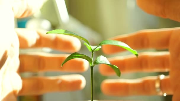 Man hands covering house-like small green sprout video. Environmentalism concept