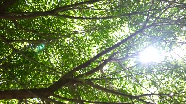 Sunlight into tree branches with leaves