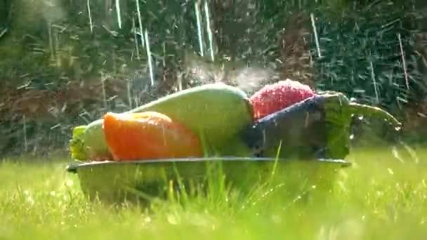 Čerstvá zelenina v misce a kapky vody rozptyl 4k video
