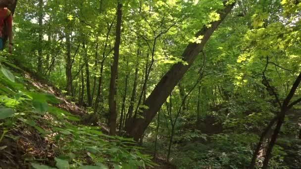 Osamělý tramp s batohem pěšky dolů z kopce v lese. 4 k steadicam klip