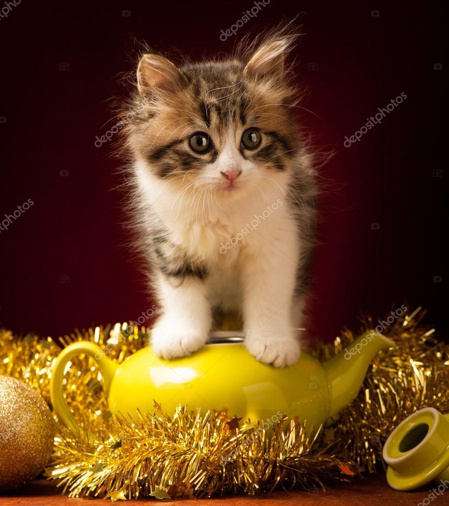 Junge Katze Spiel Mit Christbaumschmuck Stockfoto C Samotrebizan