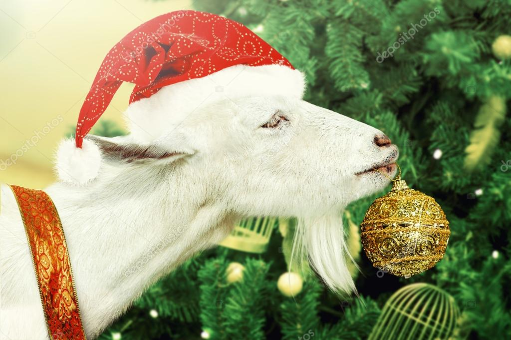 White goat decorates Christmas tree