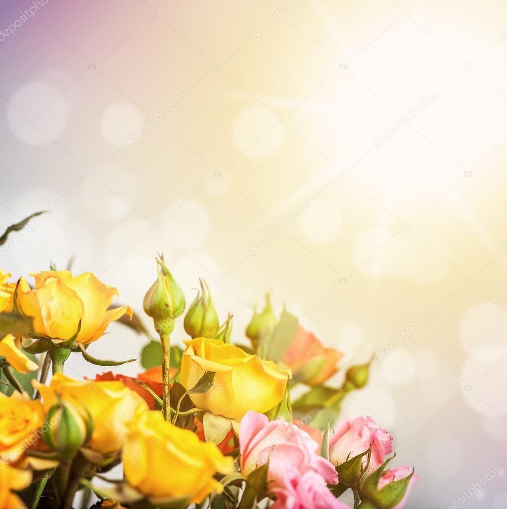 Defocus blur bright flowers - roses