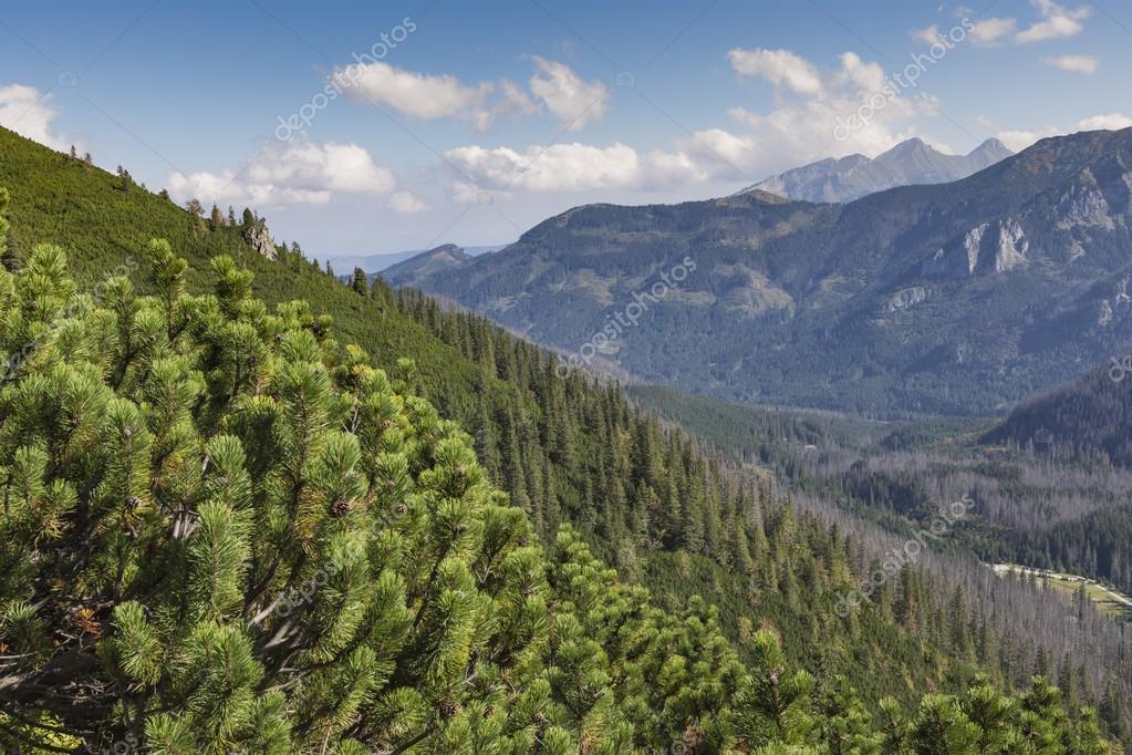 Polonia parco nazionale dei tatra in montagne di tatra for Pianta della foresta di pioppo