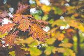 Barevné listí na stromech v podzimní sezóně v Polsku.