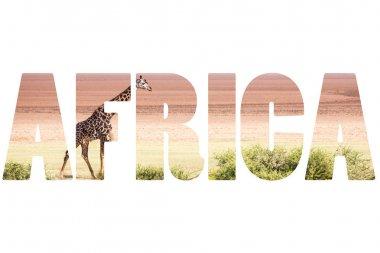 Word AFRICA over wild animals. stock vector