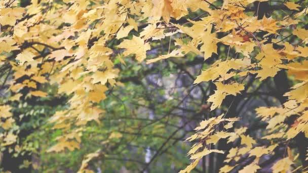 Podzimní stromy odjíždí rozmazané pozadí