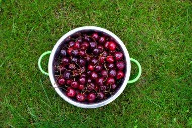 sweet cherries on grass