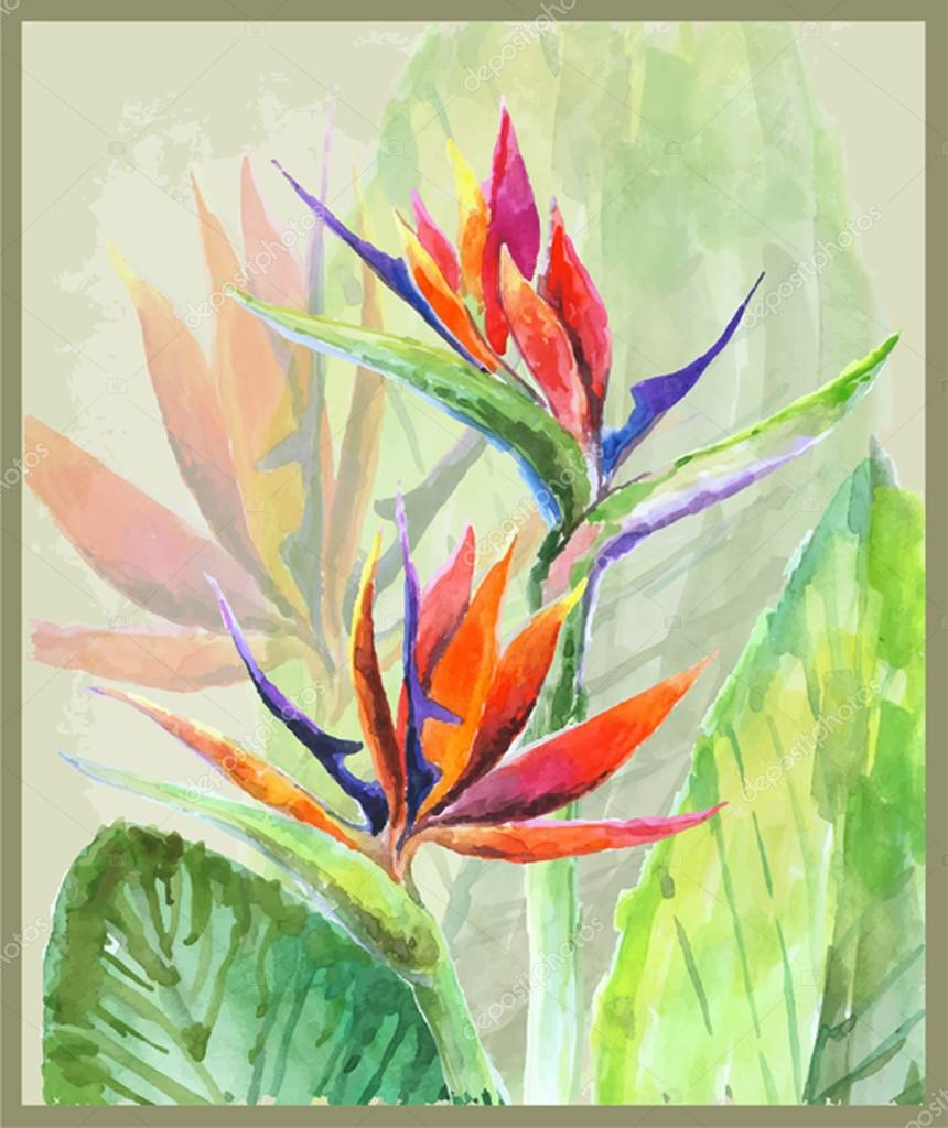 Greeting card with Bird of Paradise flowers. Illustration tropic